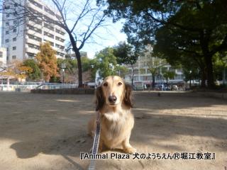 121214堀江 (1).JPG