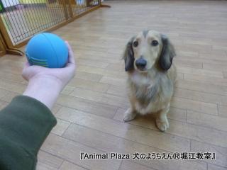 121221堀江 (17).JPG
