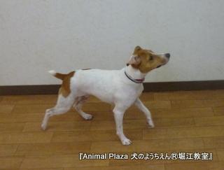 130627堀江 (13).JPG