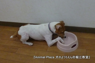130627堀江 (21).JPG