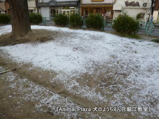 13128堀江 (22).JPG