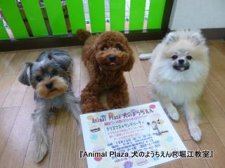 20121106堀江 (3).JPG