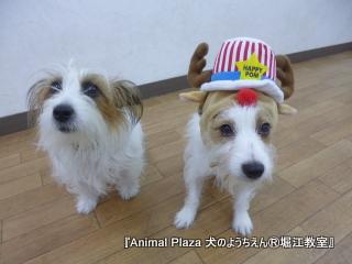 20121217堀江 (29).JPG