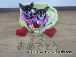 20121218堀江 (2).JPG