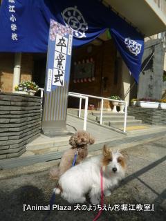2013319堀江 (10).JPG