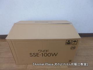 2013716堀江 (1).JPG