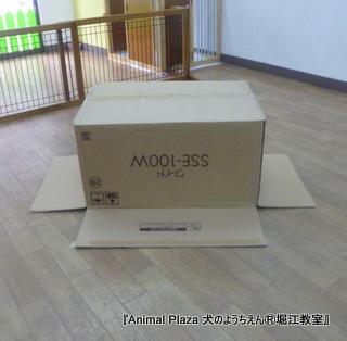 2013716堀江 (5).JPG