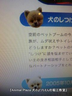 2013820堀江 (4).JPG