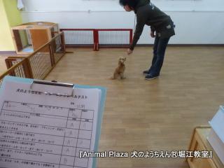 2014127堀江 (18).JPG