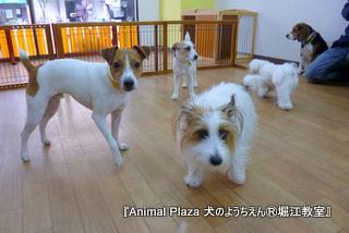 2014225堀江 (3).JPG