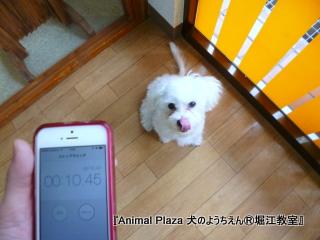 2014421堀江 (29).JPG