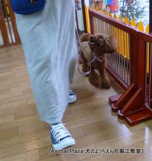 2014422堀江 (3).JPG