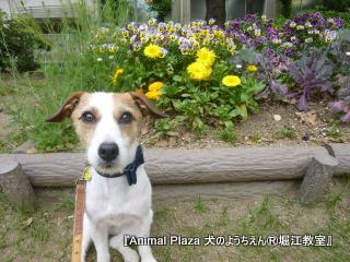 2014512堀江 (14).JPG