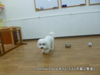 2014512堀江 (18).JPG