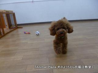 2014512堀江 (19).JPG