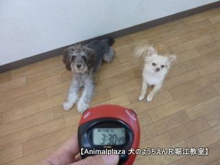 2014616堀江 (27).JPG