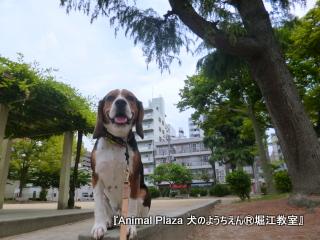 201463堀江 (10).JPG