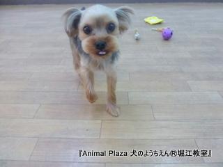 201463堀江 (17).JPG
