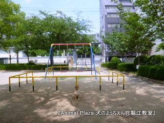 201463堀江 (2).JPG