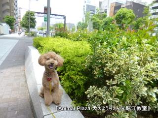 201463堀江 (3).JPG
