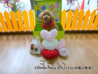 201463堀江 (7).JPG