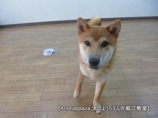 2014715堀江 (14).JPG