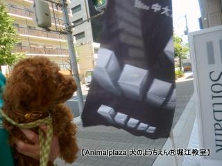 2014715堀江 (3).JPG