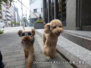 2014719堀江 (15).JPG