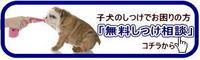 しつけho相談バナー.jpg