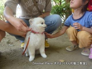 犬のようちえん堀江教室130515 (22).JPG