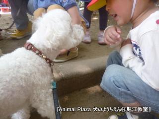 犬のようちえん堀江教室130515 (23).JPG