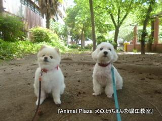 犬のようちえん堀江教室130515 (24).JPG