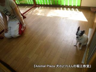 犬のようちえん堀江教室130520 (16).JPG