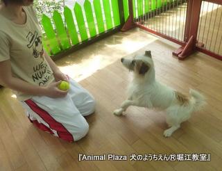 犬のようちえん堀江教室130520 (27).JPG