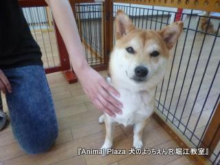 犬のようちえん堀江教室130520 (28).JPG