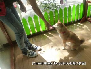 犬のようちえん堀江教室130520 (29).JPG