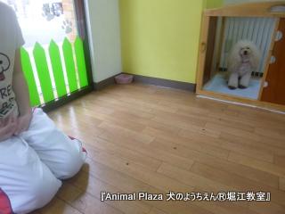 犬のようちえん堀江教室130520 (31).JPG