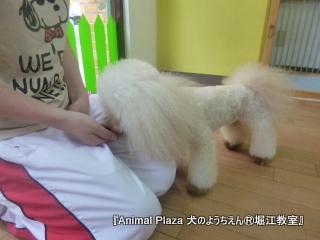 犬のようちえん堀江教室130520 (33).JPG