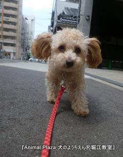 犬のようちえん堀江教室130910 (28).JPG