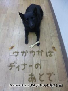 犬のようちえん堀江教室131015 (13).JPG