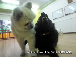 犬のようちえん堀江教室131015 (21).JPG
