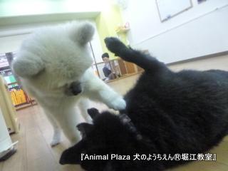 犬のようちえん堀江教室131015 (22).JPG