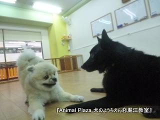 犬のようちえん堀江教室131015 (23).JPG