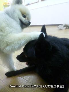 犬のようちえん堀江教室131015 (24).JPG