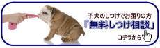 犬のようちえん大阪堀江教室無料しつけ相談.jpg